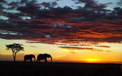 后疫情时代:非洲国家努力促进旅游业复苏